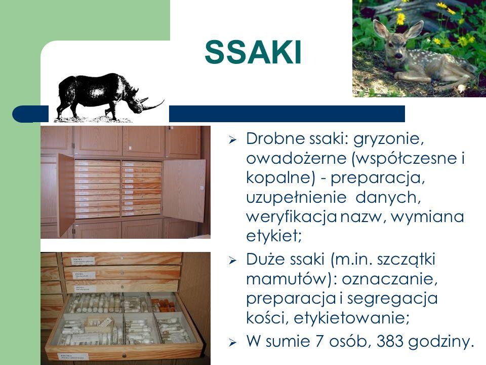 SSAKI Drobne ssaki: gryzonie, owadożerne (współczesne i kopalne) - preparacja, uzupełnienie danych, weryfikacja nazw, wymiana etykiet;
