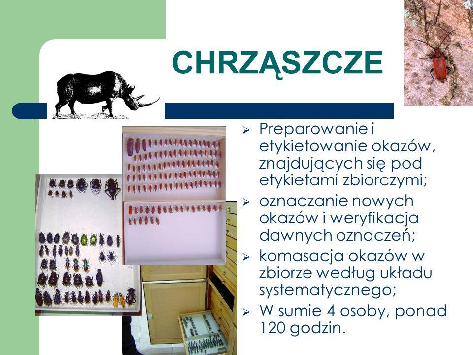 CHRZĄSZCZE Preparowanie i etykietowanie okazów, znajdujących się pod etykietami zbiorczymi; oznaczanie nowych okazów i weryfikacja dawnych oznaczeń;