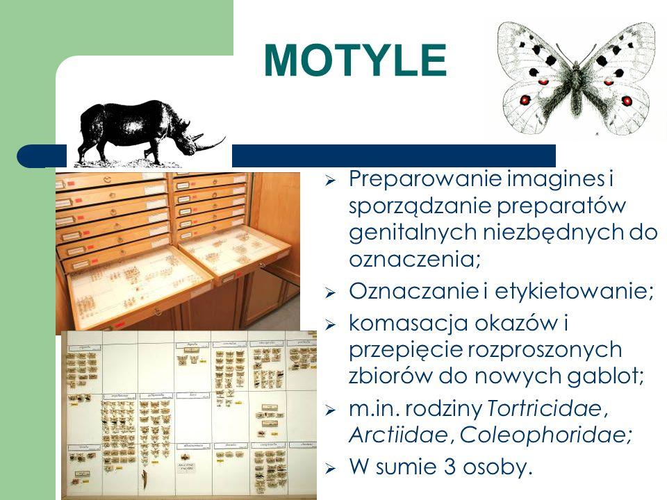 MOTYLE Preparowanie imagines i sporządzanie preparatów genitalnych niezbędnych do oznaczenia; Oznaczanie i etykietowanie;