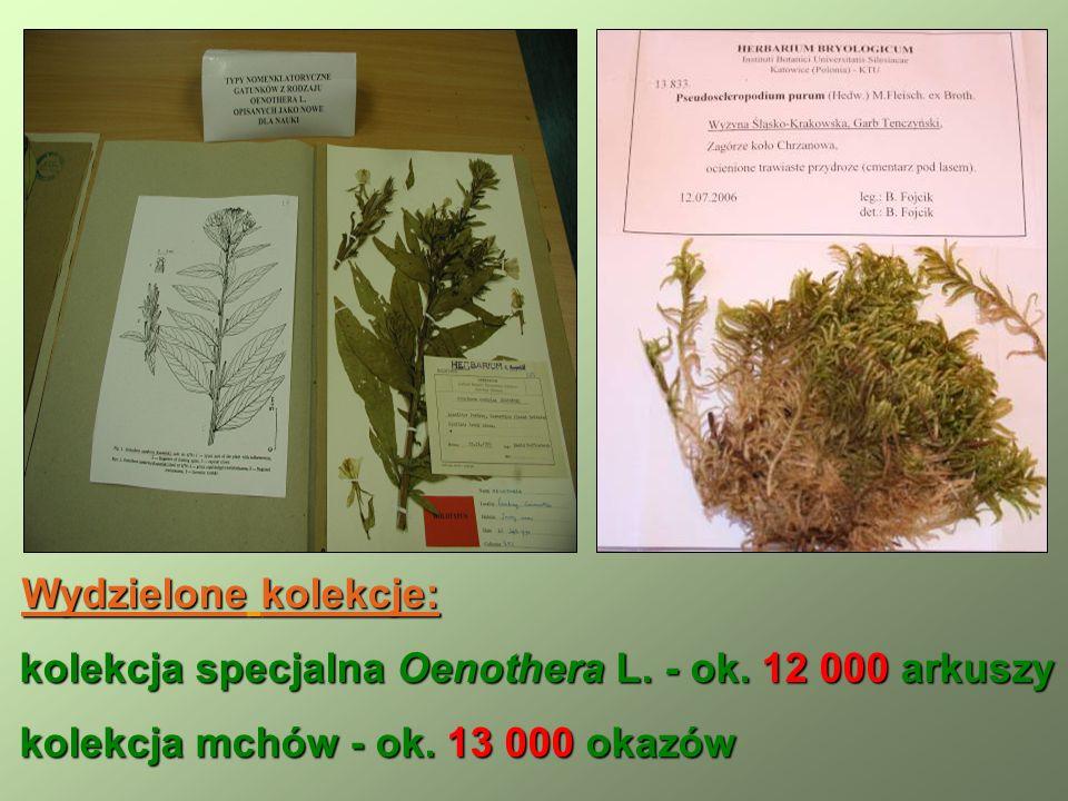 Wydzielone kolekcje: kolekcja specjalna Oenothera L.