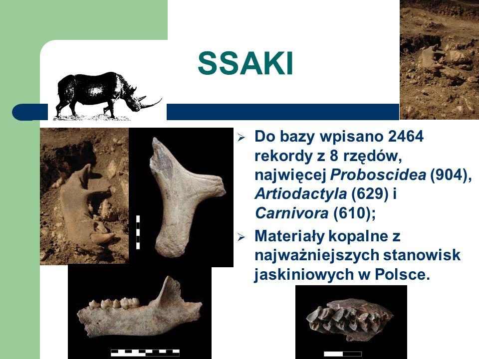 SSAKI Do bazy wpisano 2464 rekordy z 8 rzędów, najwięcej Proboscidea (904), Artiodactyla (629) i Carnivora (610);