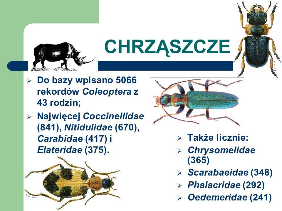 CHRZĄSZCZE Do bazy wpisano 5066 rekordów Coleoptera z 43 rodzin;