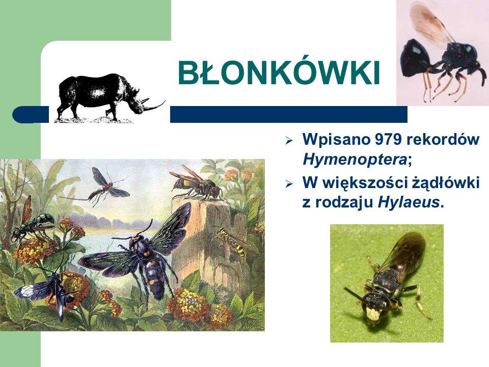 BŁONKÓWKI Wpisano 979 rekordów Hymenoptera;