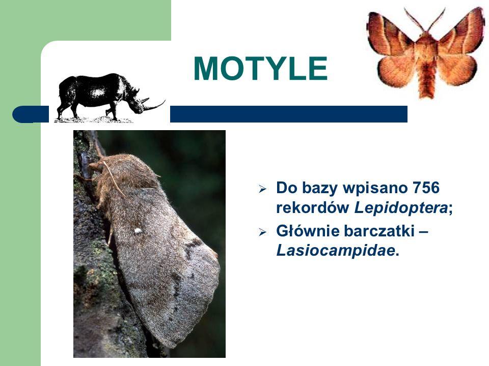 MOTYLE Do bazy wpisano 756 rekordów Lepidoptera;