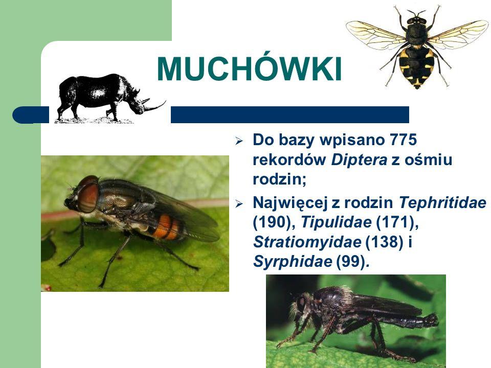 MUCHÓWKI Do bazy wpisano 775 rekordów Diptera z ośmiu rodzin;