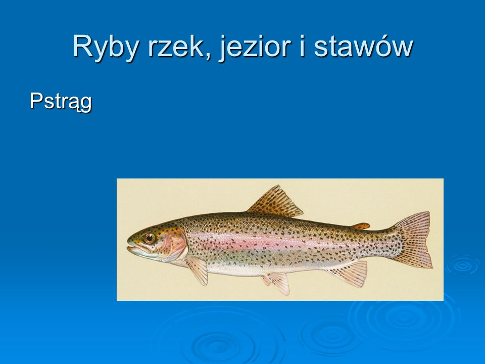 Ryby rzek, jezior i stawów