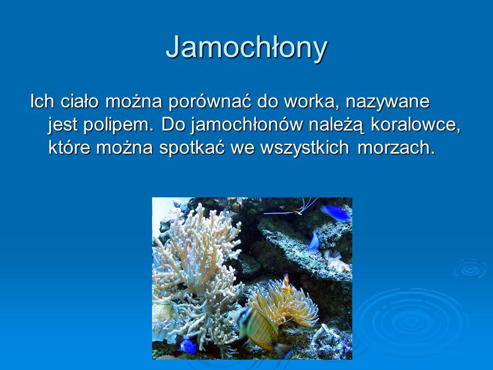 Jamochłony Ich ciało można porównać do worka, nazywane jest polipem.