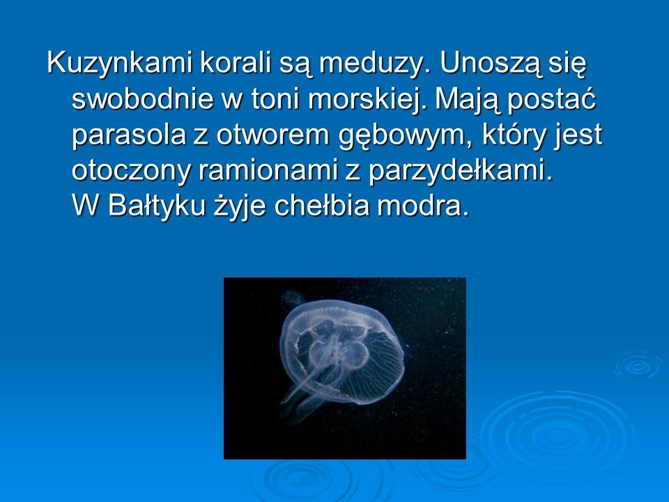 Kuzynkami korali są meduzy. Unoszą się swobodnie w toni morskiej