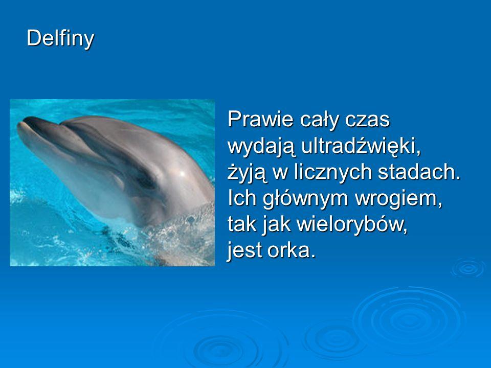 Delfiny Prawie cały czas wydają ultradźwięki, żyją w licznych stadach.
