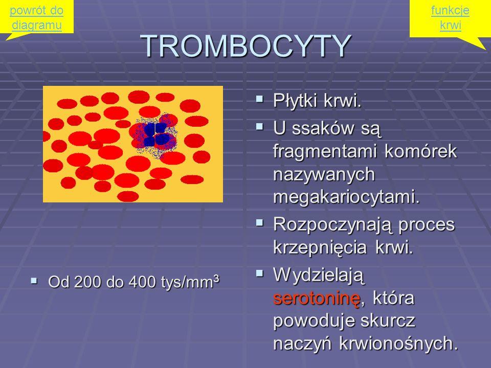 TROMBOCYTY Płytki krwi.