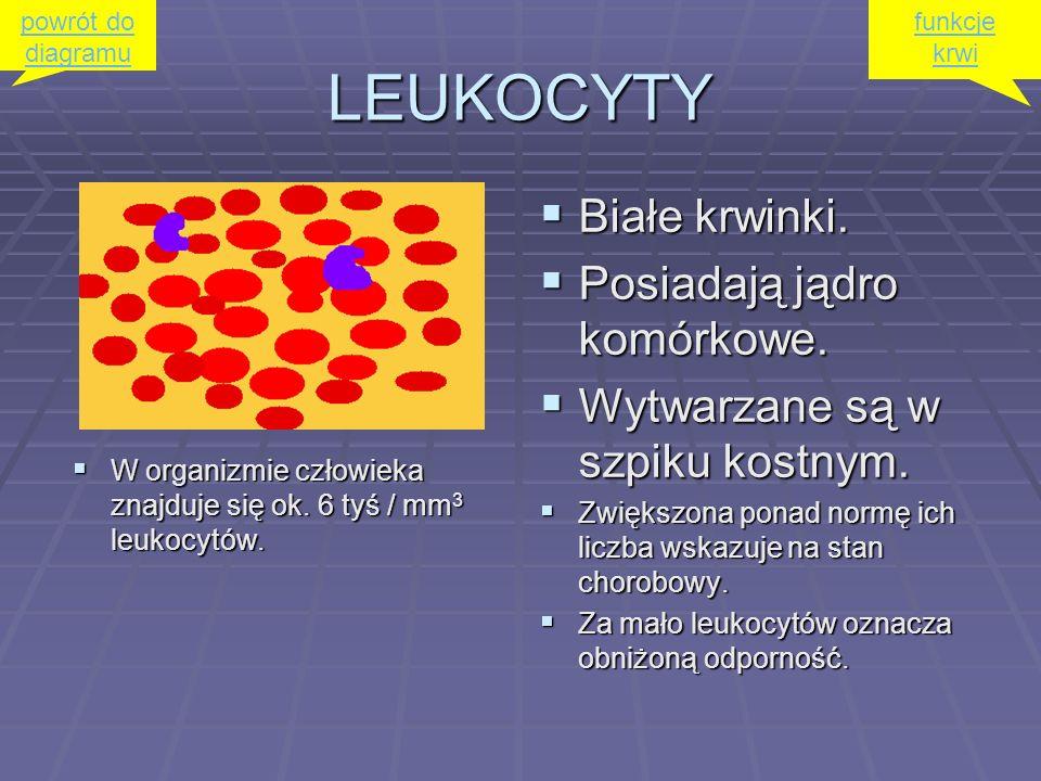 LEUKOCYTY Białe krwinki. Posiadają jądro komórkowe.