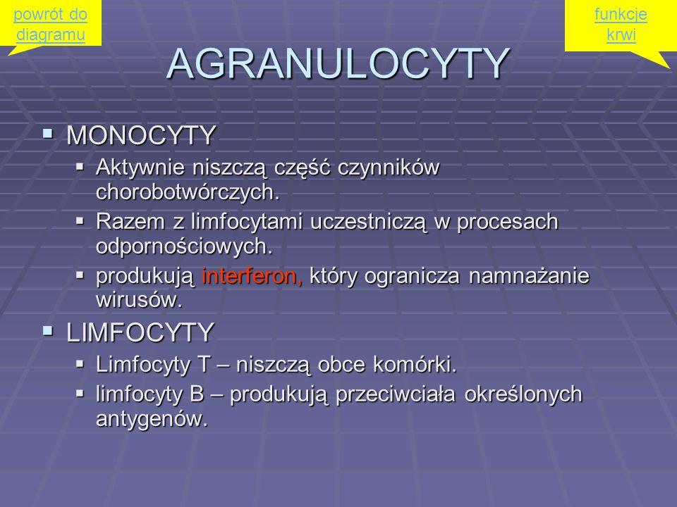 AGRANULOCYTY MONOCYTY LIMFOCYTY