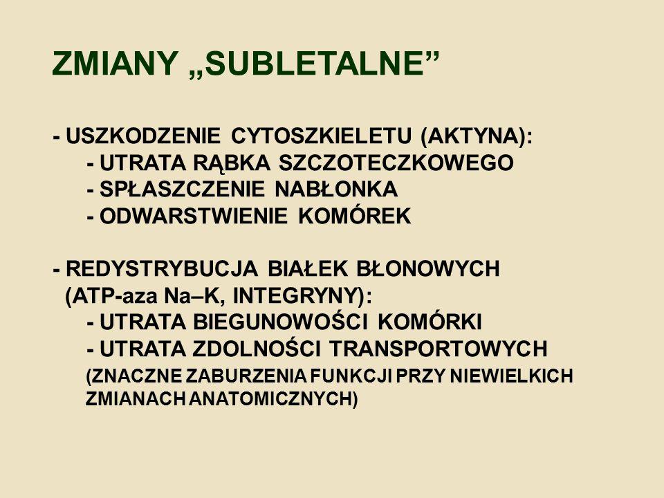 """ZMIANY """"SUBLETALNE - USZKODZENIE CYTOSZKIELETU (AKTYNA):"""