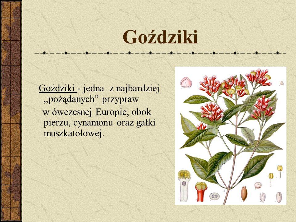 """Goździki Goździki - jedna z najbardziej """"pożądanych przypraw."""