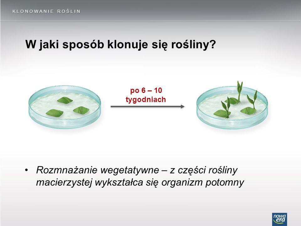 W jaki sposób klonuje się rośliny