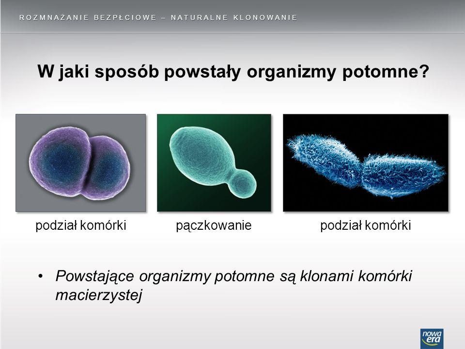 W jaki sposób powstały organizmy potomne