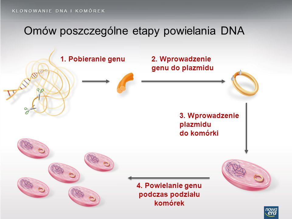 4. Powielanie genu podczas podziału komórek