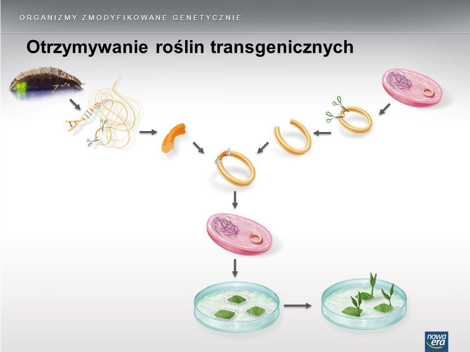Otrzymywanie roślin transgenicznych