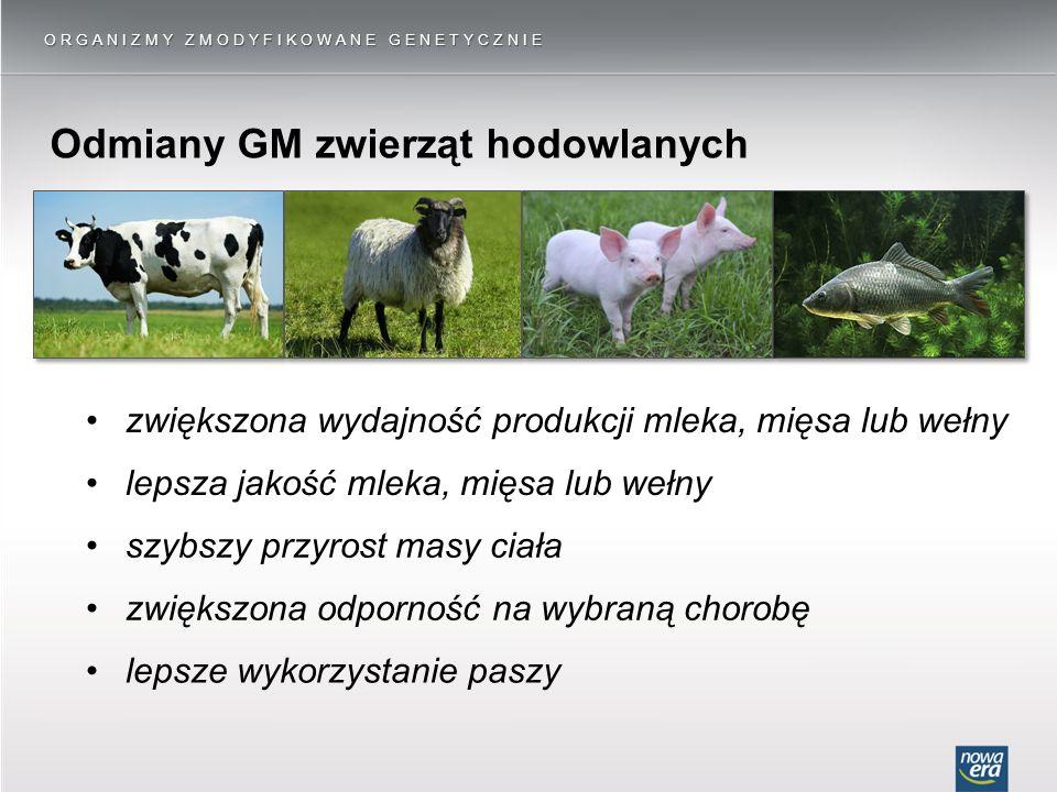 Odmiany GM zwierząt hodowlanych