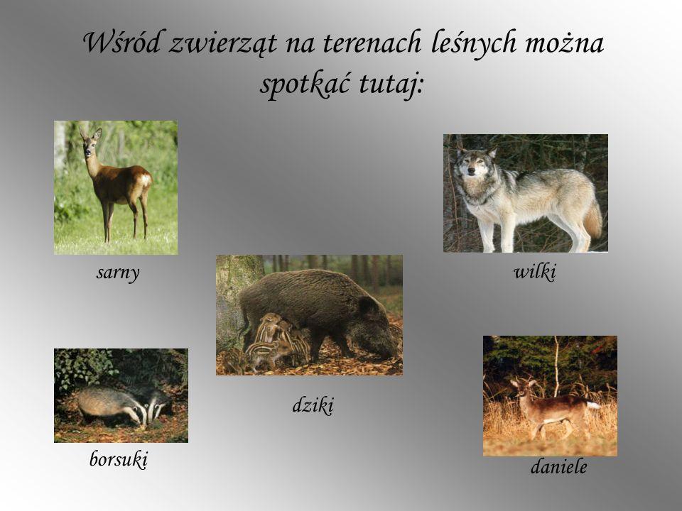 Wśród zwierząt na terenach leśnych można spotkać tutaj: