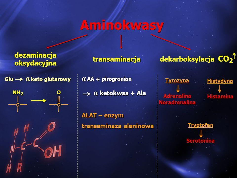 Aminokwasy CO α AA + pirogronian α ketokwas + Ala dezaminacja