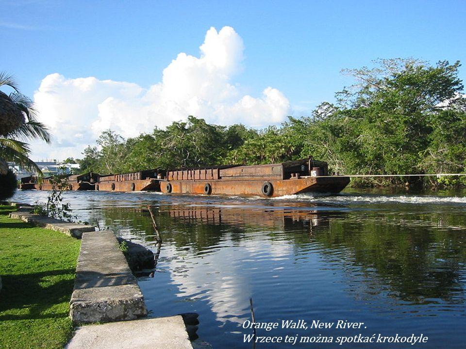 Orange Walk, New River . W rzece tej można spotkać krokodyle