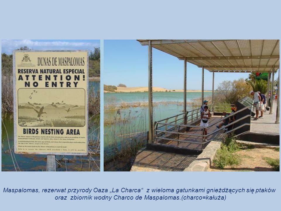 oraz zbiornik wodny Charco de Maspalomas.(charco=kałuża)