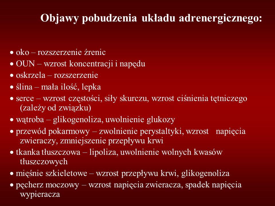 Objawy pobudzenia układu adrenergicznego: