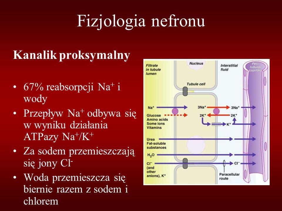 Fizjologia nefronu Kanalik proksymalny 67% reabsorpcji Na+ i wody
