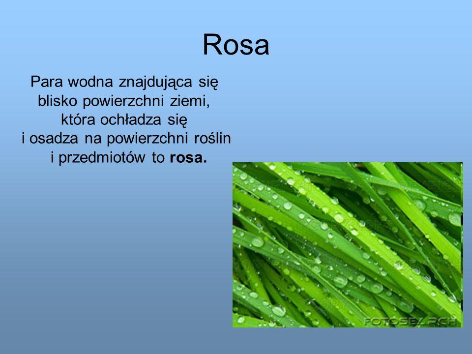 Rosa Para wodna znajdująca się blisko powierzchni ziemi,