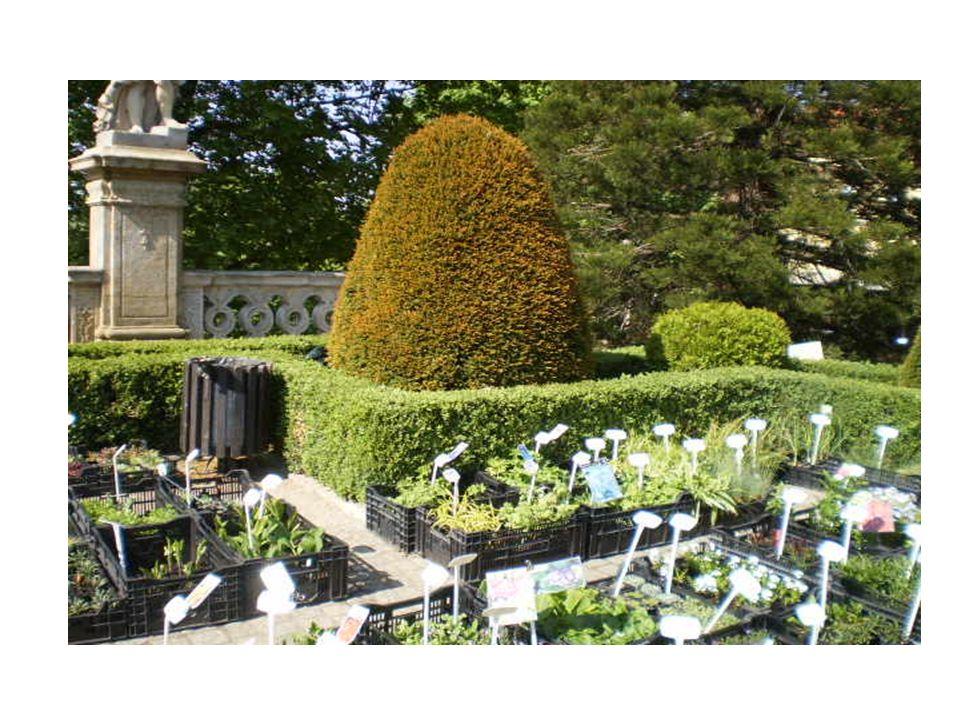 Każda roślina w ogrodzie botanicznym jest opatrzona tabliczką informacyjną z nazwą naukową i nazwą polską oraz z naturalnym obszarem jej