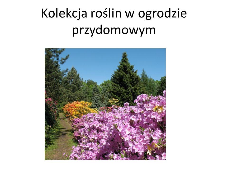 Kolekcja roślin w ogrodzie przydomowym