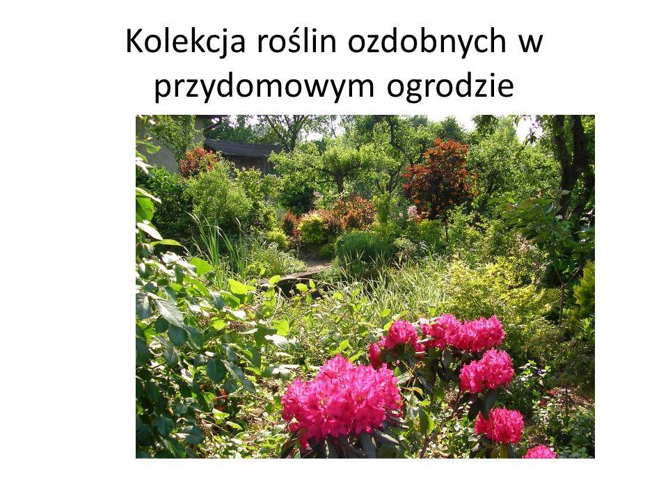 Kolekcja roślin ozdobnych w przydomowym ogrodzie