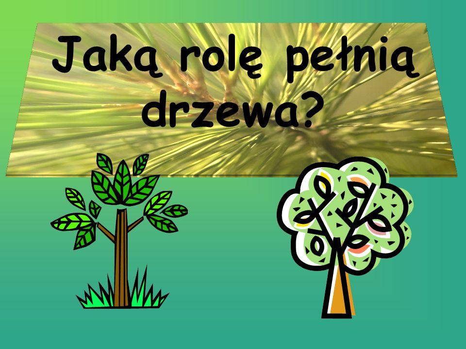 Jaką rolę pełnią drzewa
