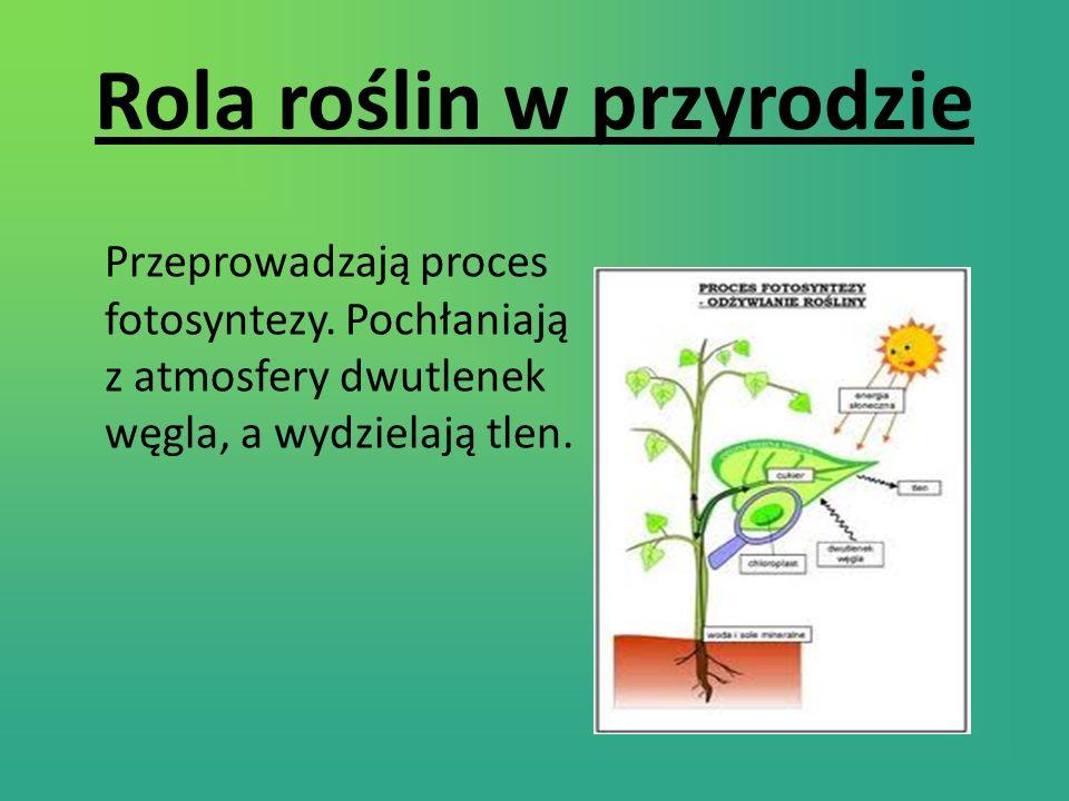 Rola roślin w przyrodzie