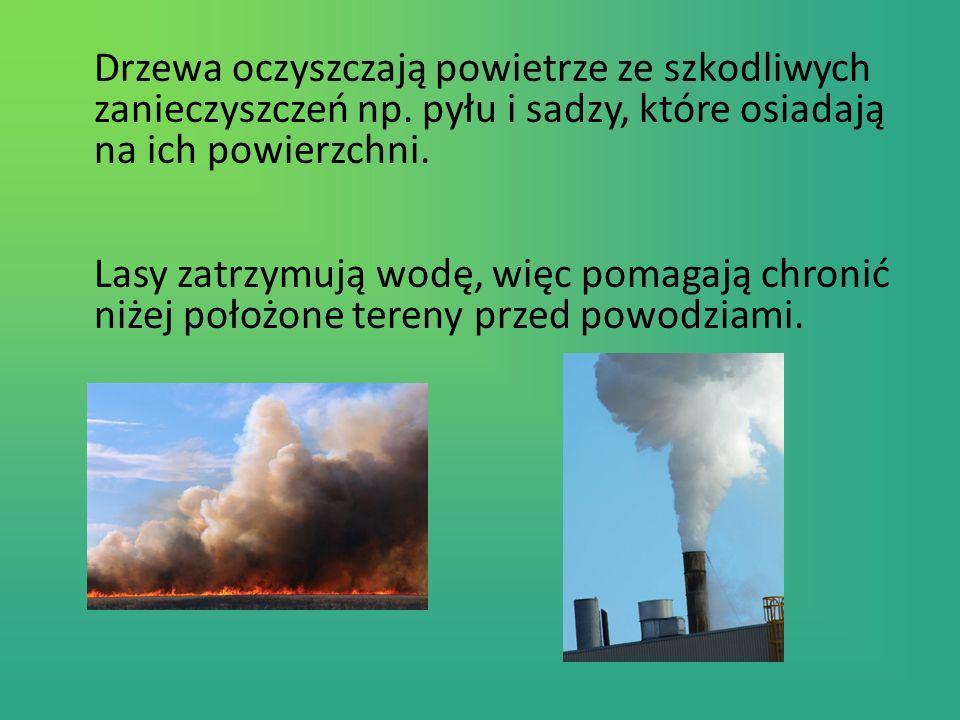 Drzewa oczyszczają powietrze ze szkodliwych zanieczyszczeń np