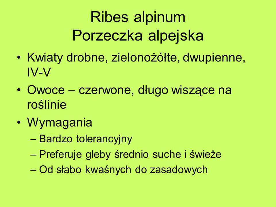 Ribes alpinum Porzeczka alpejska
