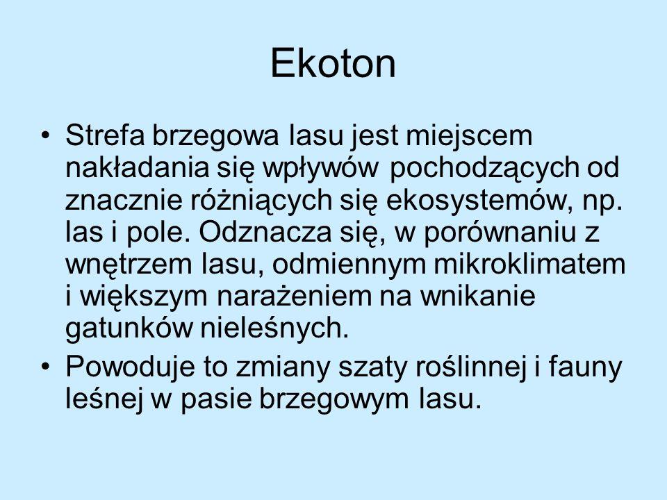 Ekoton