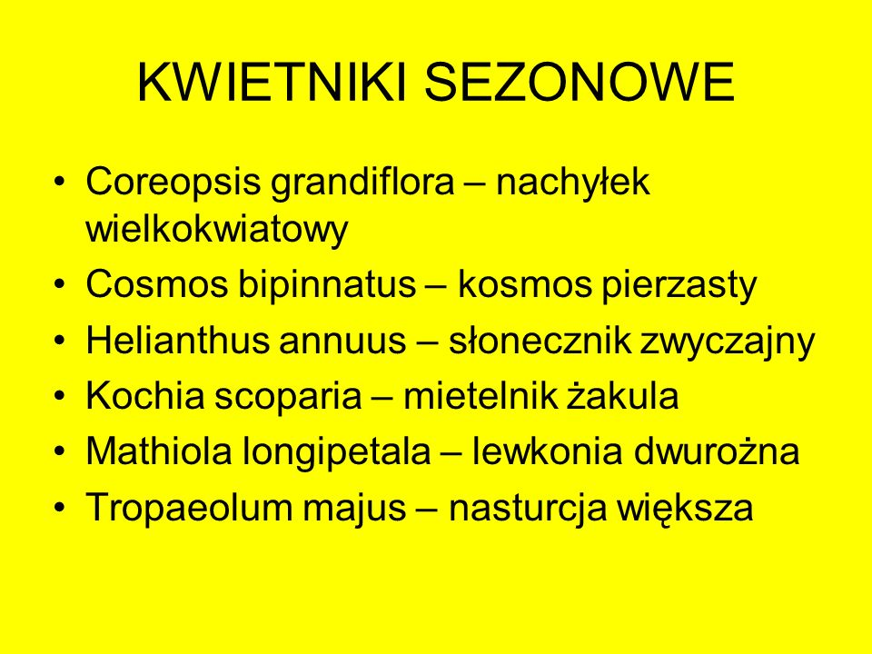 KWIETNIKI SEZONOWE Coreopsis grandiflora – nachyłek wielkokwiatowy