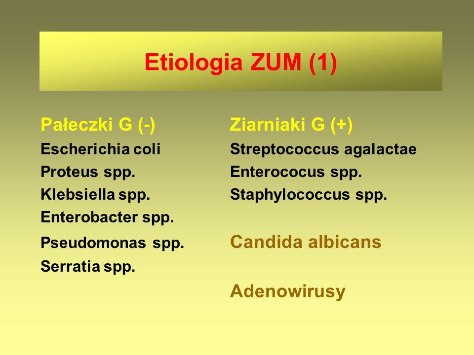 Etiologia ZUM (1) Pałeczki G (-) Ziarniaki G (+)