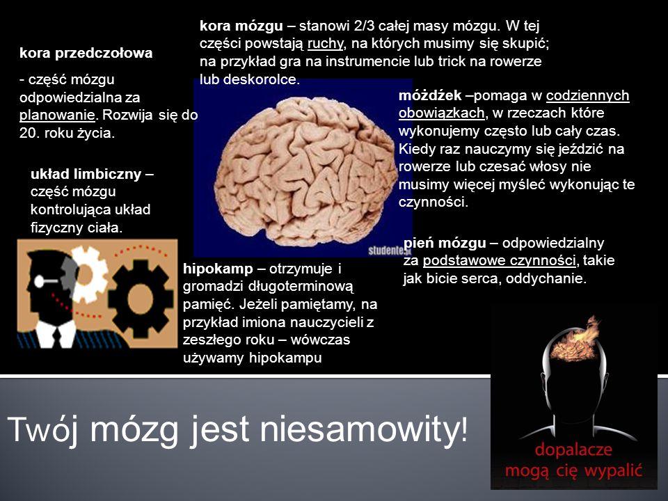 Twój mózg jest niesamowity!