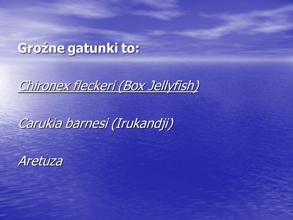 Groźne gatunki to: Chironex fleckeri (Box Jellyfish) Carukia barnesi (Irukandji) Aretuza