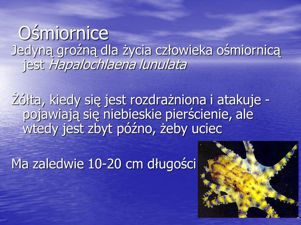 Ośmiornice Jedyną groźną dla życia człowieka ośmiornicą jest Hapalochlaena lunulata.