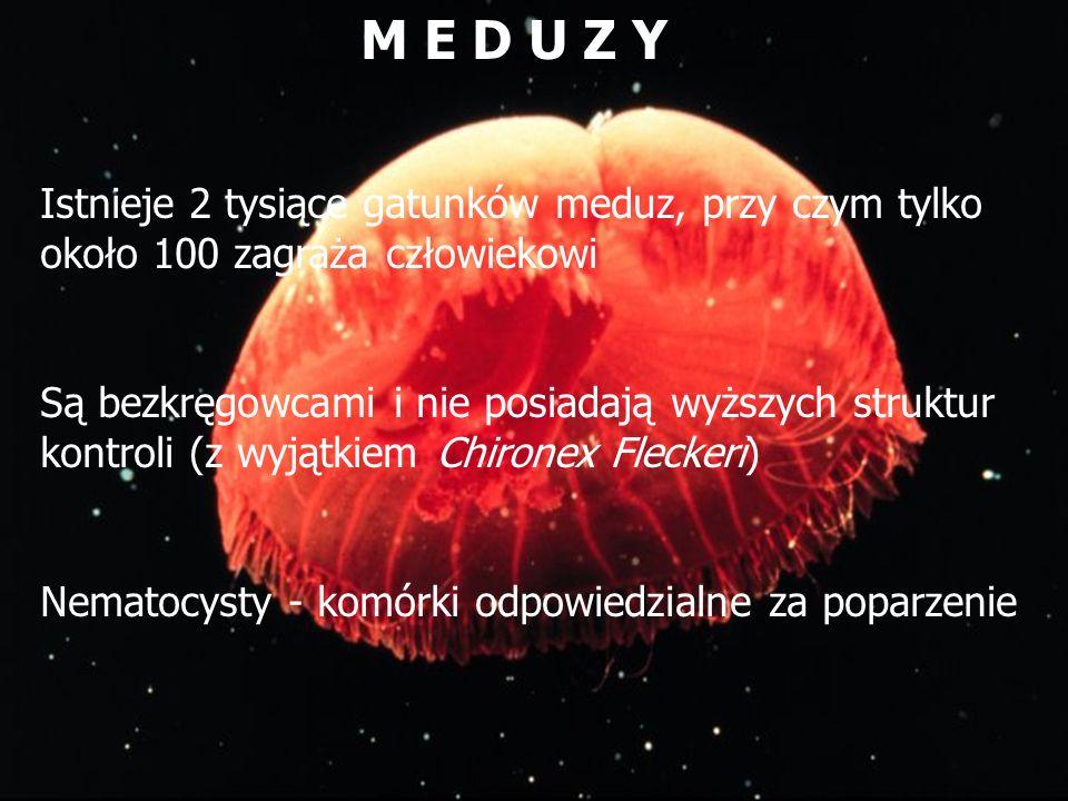 M E D U Z Y Istnieje 2 tysiące gatunków meduz, przy czym tylko około 100 zagraża człowiekowi.