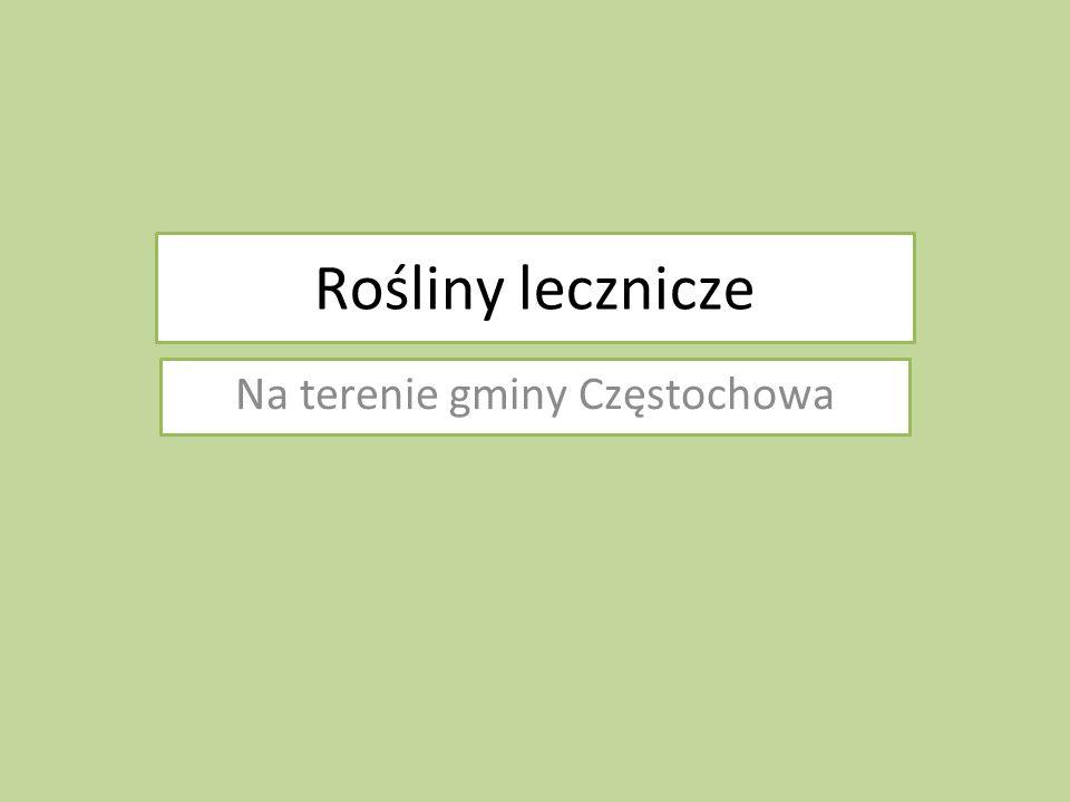 Na terenie gminy Częstochowa
