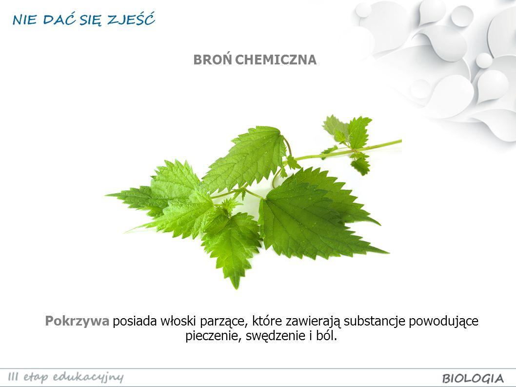 BROŃ CHEMICZNA Pokrzywa posiada włoski parzące, które zawierają substancje powodujące pieczenie, swędzenie i ból.