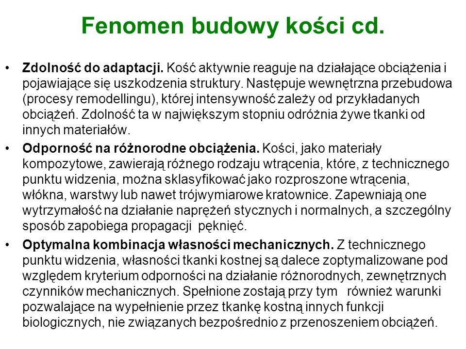 Fenomen budowy kości cd.