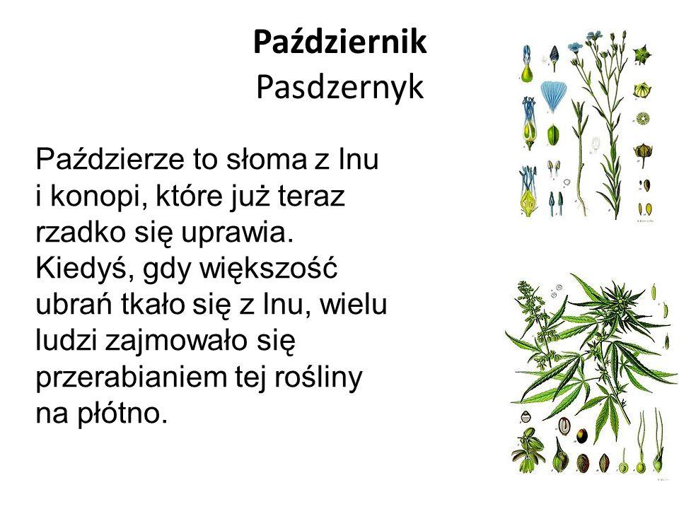 Październik Pasdzernyk