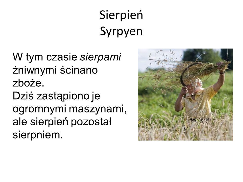 Sierpień Syrpyen W tym czasie sierpami żniwnymi ścinano zboże.