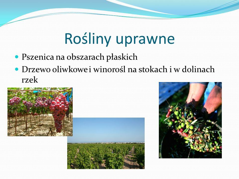 Rośliny uprawne Pszenica na obszarach płaskich